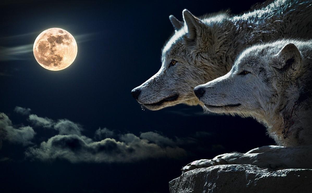 Cómo interaccionar en grupos de Linkedin: abstenerse lobos solitarios