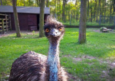 ¿Un avestruz nos puede ayudar en nuestra gestión en LinkedIn? Piwaa es la respuesta…